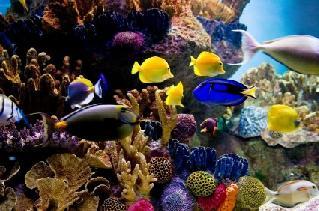 Spectrum Marine Fish Formula Ratings