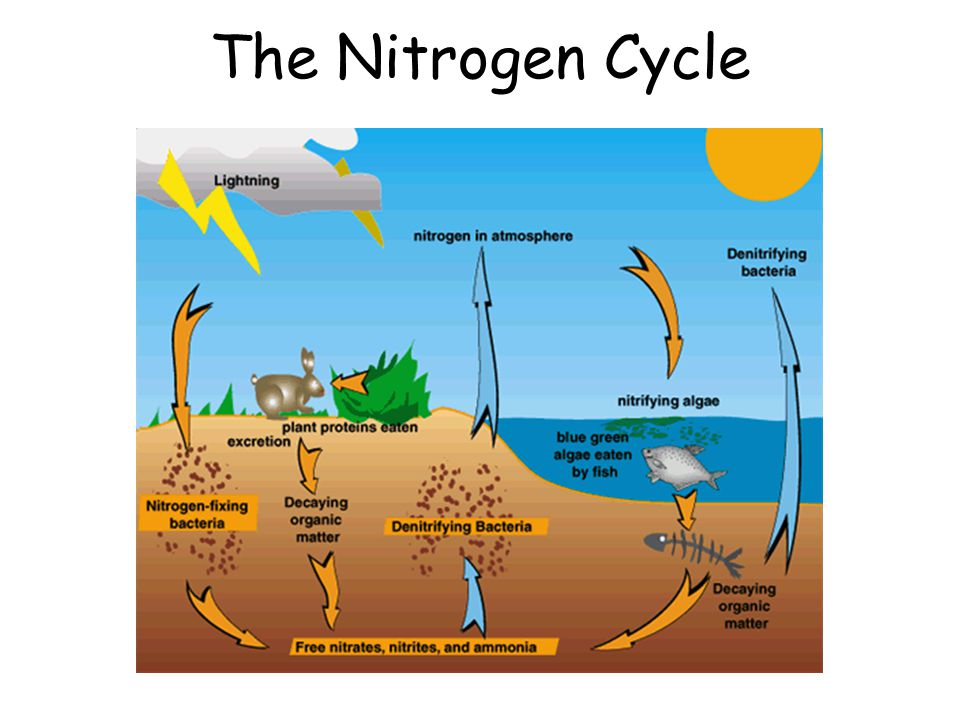 Understanding The Nitrogen Cycle
