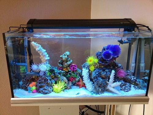 Plumbing a saltwater tank useful information on subject for Marine fish tanks