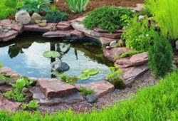 How to Keep Pond Fish Healthy