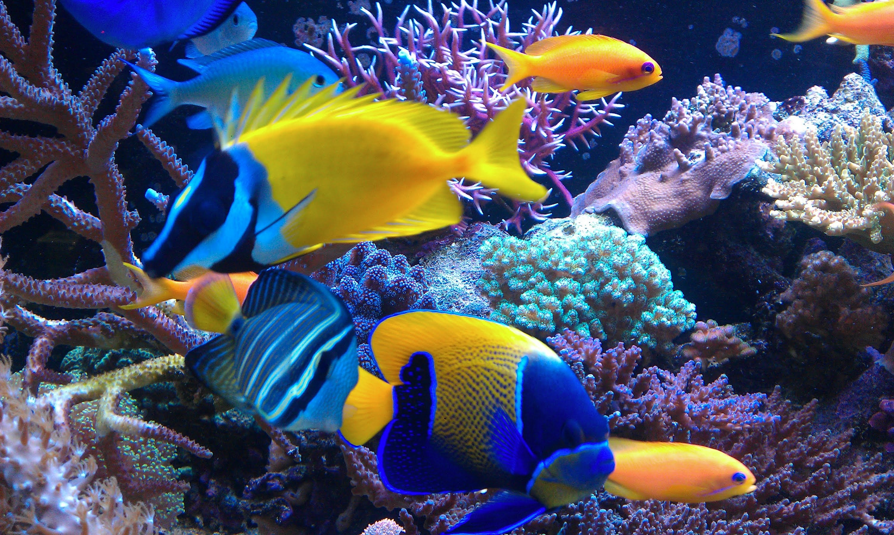 Salt water fish detailed information and recommendations for Saltwater reef fish