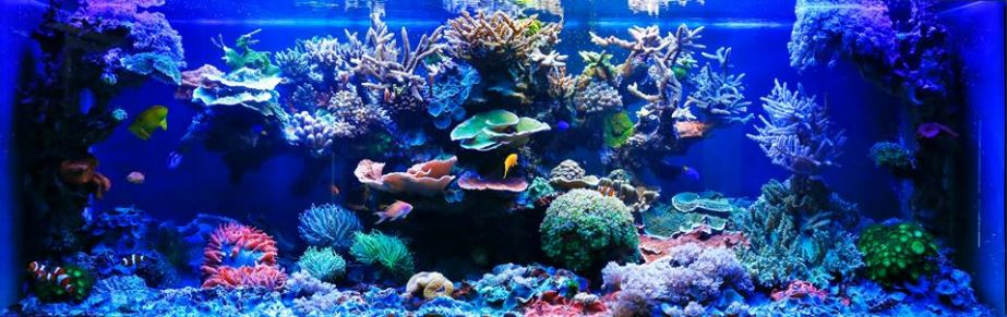 The Eco-Friendly Saltwater Aquarium