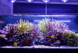 Saltwater Aquarium Lights