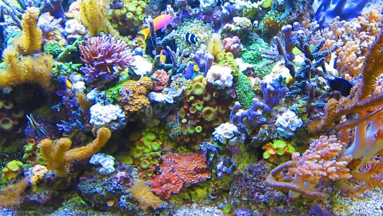 Quick Facts for Saltwater Aquarium Animals