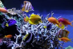 Feeding Your Saltwater Fish
