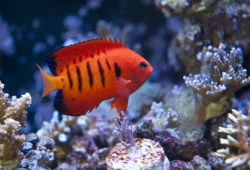 Saltwater Fish Coral