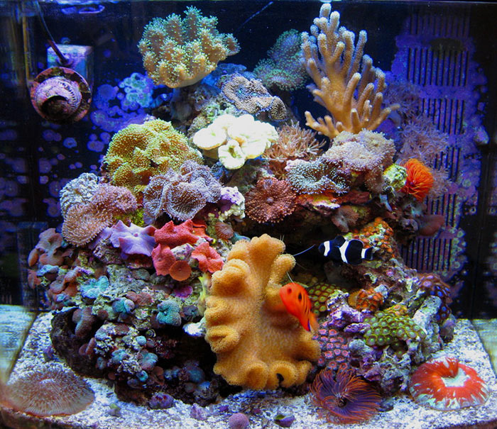 Tropical Saltwater Reef Aquarium Mushrooms