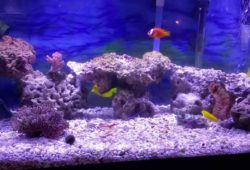Saltwater Tank Substrate or Sand