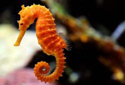 Keeping Seahorses is a cinch!