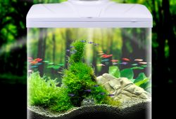 Small Fish Tanks