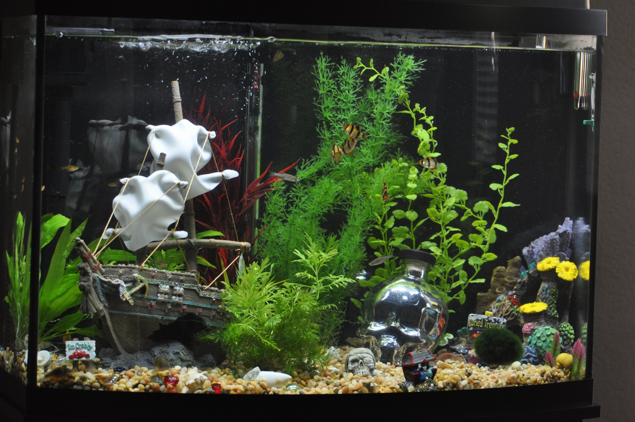 The pirate aquarium theme interesting considerations on for Tall fish tank decorations