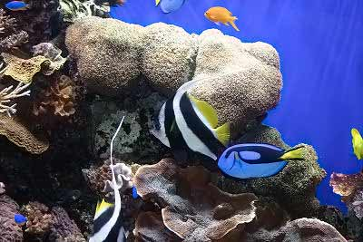 Your First Tropical Aquarium Saltwater Fish
