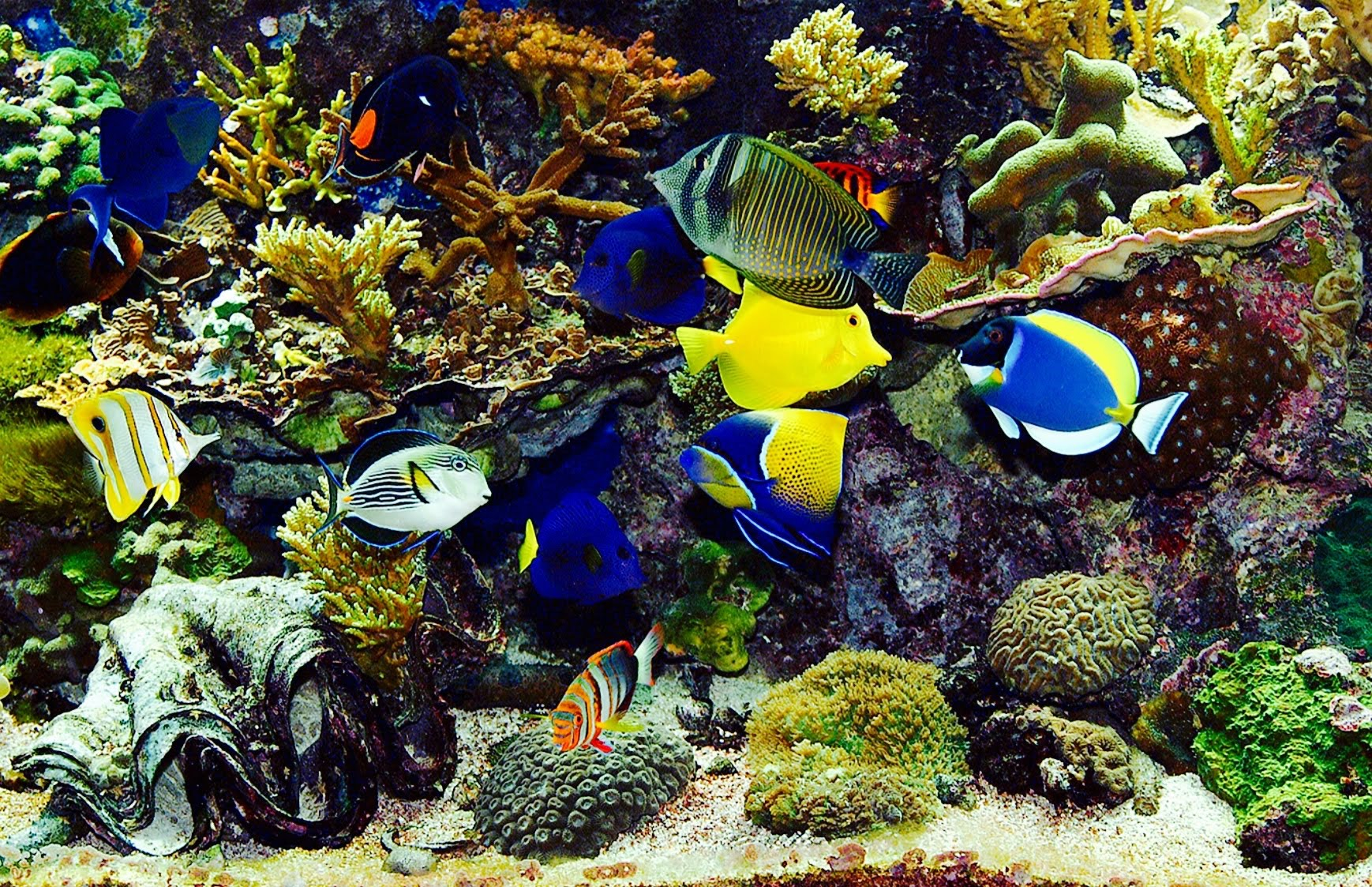 Tropical fish information and recommendations on subject for Exotic fish tanks