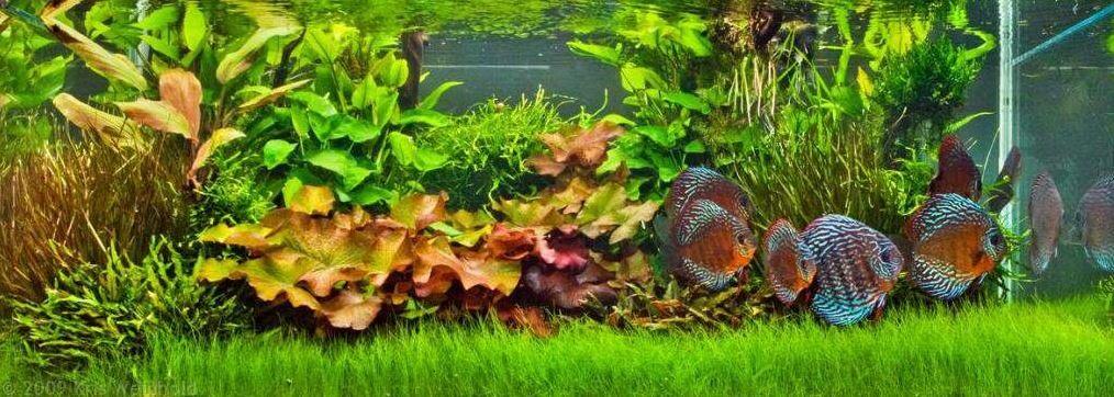 Tropical Fish Tanks
