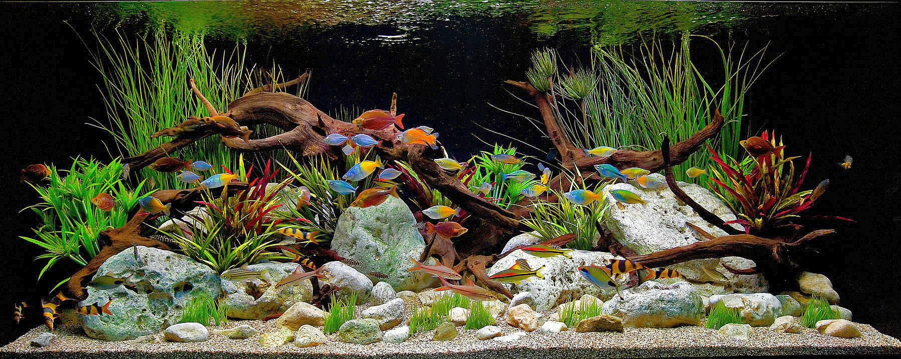 Caring for Tropical Freshwater Aquariums
