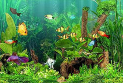 Basic Care for Tropical Freshwater Aquariums