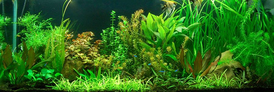 Water Current in Aquariums