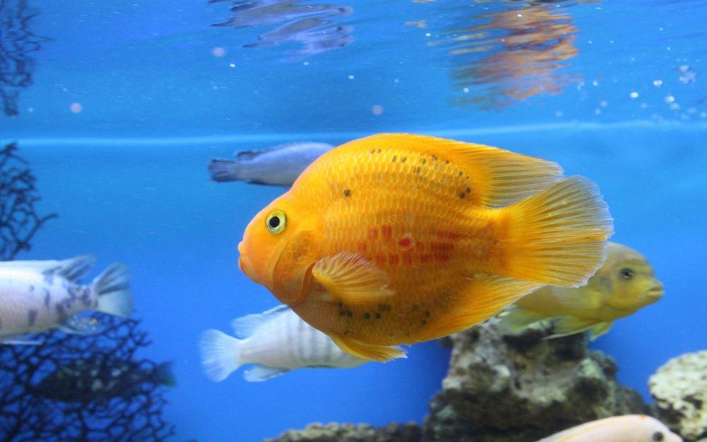 Why did my fish die