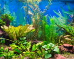 Growing aquarium plants