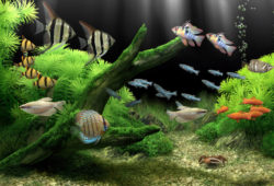 Can you conserve your aquarium water?