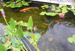 Is your pond missing something?