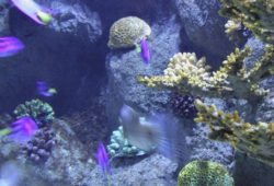 Easy invertebrates for the reef tank