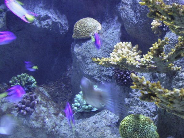 invertebrates for the reef tank