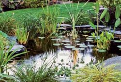 Preparing your pond for spring
