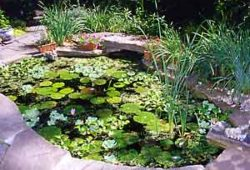 A water garden in a weekend